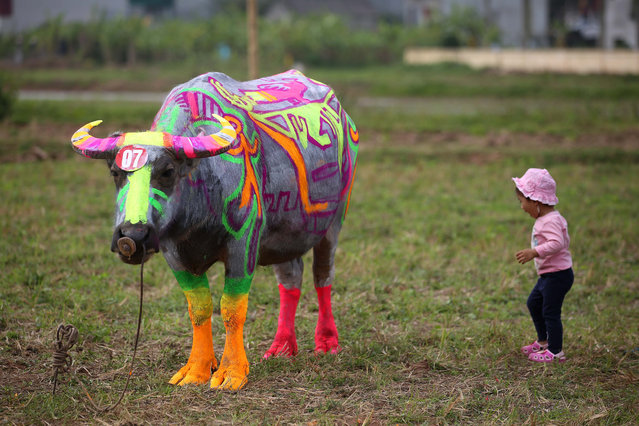 "A little girl stands next to a painted buffalo during the ""Buffalo Painting"" contest that is part of the Tich Dien festival in Ha Nam province, Vietnam, 10 February 2019. Artists from all over the country have gathered for the festival which attracts thousand of residents and visitors. Tich Dien festival features the importance of agriculture and the role of farmers in the vietnamese society and contributes to preserving the local cultural values. (Photo by Luong Thai Linh/EPA/EFE)"