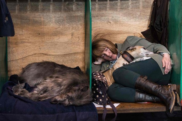 A woman rests with dogs in a dog pen on the first day of the Crufts dog show at the National Exhibition Centre in Birmingham, central England, on March 9, 2017. (Photo by Oli Scarff/AFP Photo)