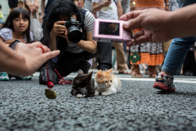 """Kittens on the street of Ginza"". Every weekends, the main street of Ginza is closed off to traffic,and become a ""pedestrian heaven"". But I found the street is not only occupied by human, also by a group of cat and kittens, which large crowd of people had gathered to take photos of. Photo location: Ginza, Tokyo, Japan. (Photo and caption by Heidi Fok/National Geographic Photo Contest)"