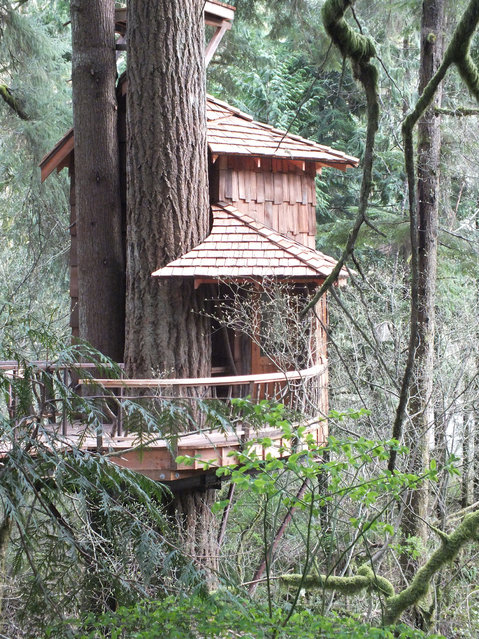 The Burl, Treehouse Point, Fall City, WA. A massive Douglas fir and sister hemlock take center stage at the Burl treehouse. One of the difficulties in designing a treehouse is not overwhelming the trees themselves – here that was very hard to do. (Photo by Pete Nelson)