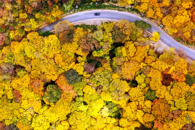 An aerial picture taken on October 23, 2019 shows a car moving along a road near the village of Martkopi, outside Tbilisi, Georgia. (Photo by Vano Shlamov/AFP Photo)