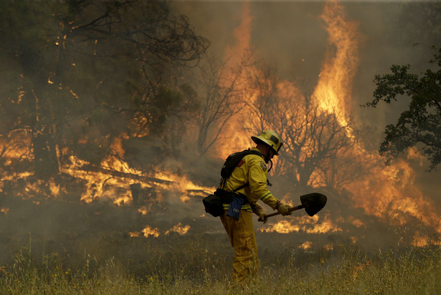 Cal Fire engineer Johnny Miller stands in front of a fire off of Morgan Valley Road near Lower Lake, Calif., Friday, July 31, 2015. (Photo by Jeff Chiu/AP Photo)