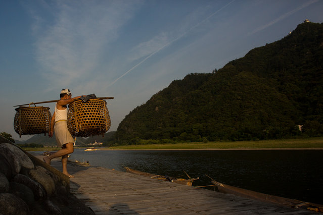 """A boatman carries baskets of sea cormorants to a fishing boat ahead of the nights """"Ukai"""" on July 2, 2014 in Gifu, Japan. In this traditional fishing art """"ukai"""", a cormorant master called """"usho"""" manages cormorants to capture ayu or sweetfish. The ushos of River Nagara have been the official staff of the Imperial Household Agency of Japan since 1890. Currently six imperial fishermen of Nagara River conduct special fishing to contribute to the Imperial family eight times a year, on top of daily fishing from mid-May to mid-October. (Photo by Chris McGrath/Getty Images)"""