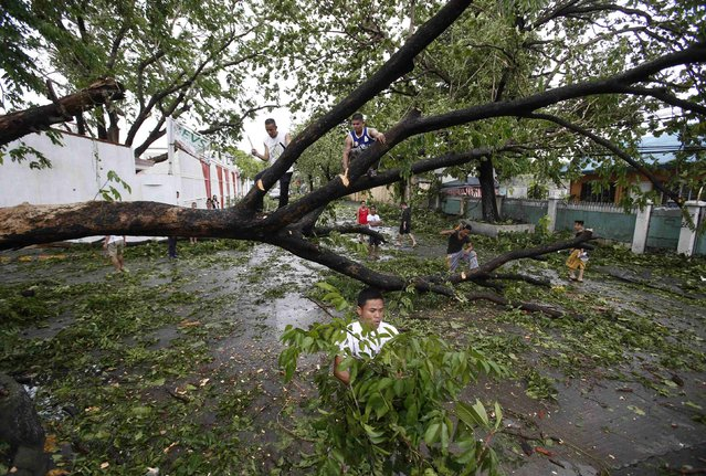 Residents cut the branches of a huge tree that fell along a road at the onslaught of Typhoon Rammasun, (locally named Glenda) at a subdivision in Paranaque, Metro Manila, July 16, 2014. The typhoon killed at least 10 people as it churned across the Philippines and shut down the capital, cutting power and prompting the evacuation of almost more than 370,000 people, rescue officials said on Wednesday. (Photo by Erik De Castro/Reuters)