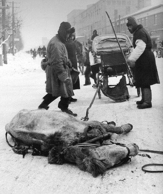 1948年1月,沈阳。骡死了! (January 1948, Shenyang. The mule dead)