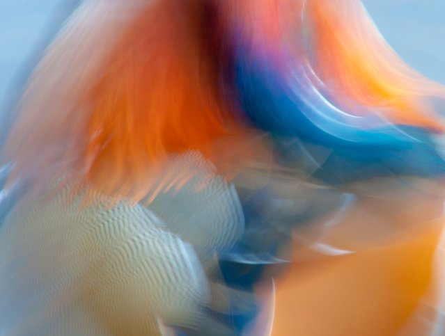 Creative imagery gold winner. Mandarin abstract by James Hudson, UK. (Photo by BPOTY/Cover Images)