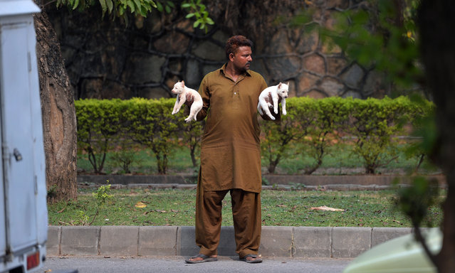 A Pakistani man holds a pair of puppies as he waits for customers on a street in Islamabad on October 13, 2015. (Photo by Aamir Qureshi/AFP Photo)