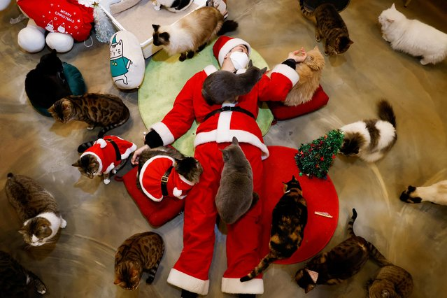 An employee dressed in a Santa Claus costume plays with cats at the Catgarden in Seoul, South Korea, December 14, 2020. (Photo by Kim Hong-Ji/Reuters)