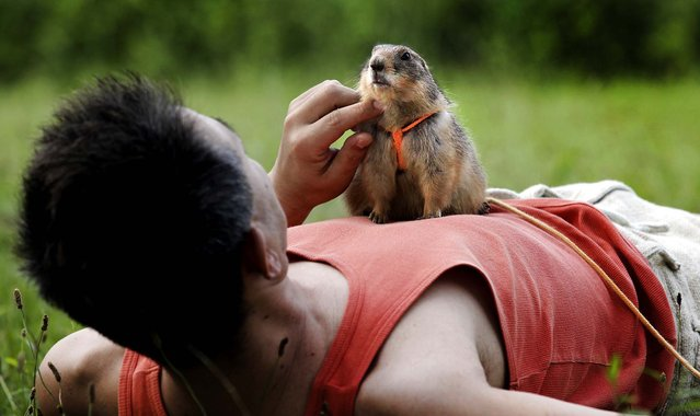 Hiroyuki Ota plays with his prairie dog, Cookie, at a park in Tokyo, on June 23, 2013. (Photo by Shizuo Kambayashi/Associated Press)