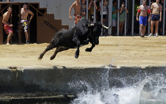 """A cow chasing revellers jumps into the sea during the """"Bous a la Mar"""" festival in the eastern Spanish coastal town of Denia July 8, 2013. During this festival, revellers emerging from protective barriers provoke bulls to chase them until they both fall into sea. The bulls are then rescued by small boats which will tow them to safety. (Photo by Heino Kalis/Reuters)"""