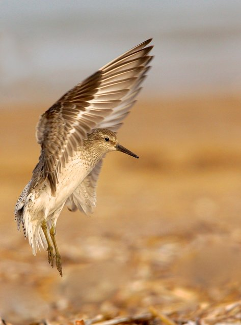 Category Five – Birds and the Bees. Junior Winner. (Photo by Alex Berryman)