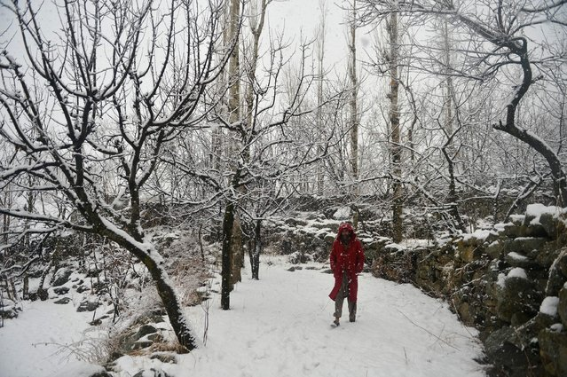 A Kashmiri muslim walks during snowfall on the outskirts of Srinagar on January 5, 2017. (Photo by Tauseef Mustafa/AFP Photo)