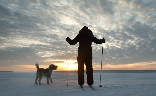 A cross country skier watches as the sun rises with a dog, on a snow covered lake in the Kawartha Lakes region of Ontario in this March 10, 2015 file photo. (Photo by Fred Thornhill/Reuters)