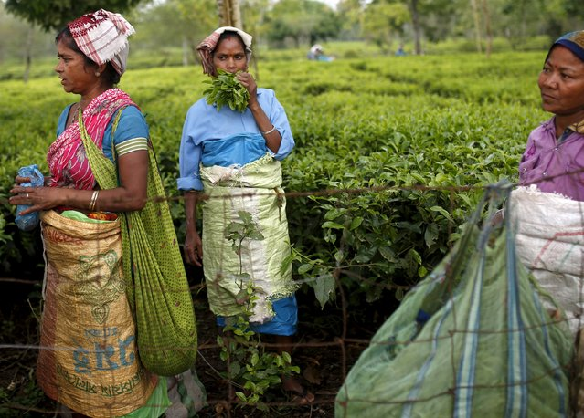 Tea garden workers take a break from plucking tea leaves inside Aideobarie Tea Estate in Jorhat in Assam, India, April 21, 2015. (Photo by Ahmad Masood/Reuters)