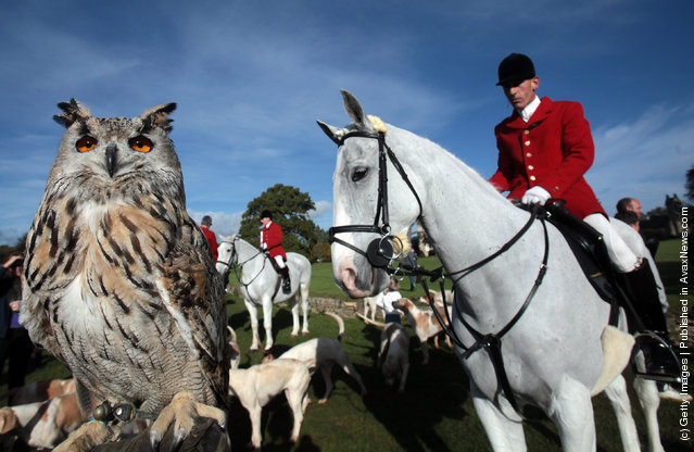 A hunting owl watches as members of the Avon Vale hunt gather in the grounds of Neston Park