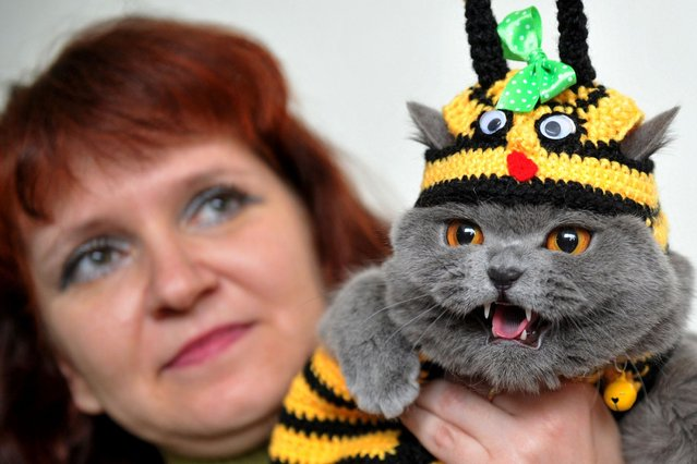 A woman and her British Shorthair cat, wearing a bee hat, pose during a cat exhibition in Bishkek on March 23, 2013. Cat lovers from Kyrgyzstan, Kazakhstan and Uzbekistan took part in the exhibition. (Photo by Vyacheslav Oseledko/AFP Photo)