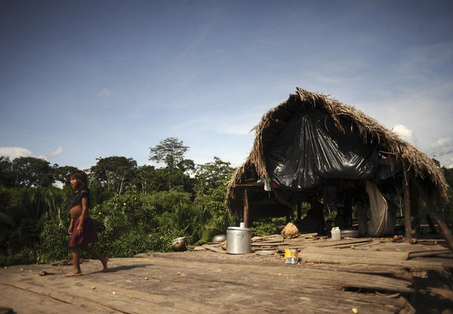 A Madija Indian child walks from one of the village huts which is a frequent target of raids by uncontacted Indians in the village of Dsama, along the Envira river in Brazil's northwestern Acre state, March 11, 2014. (Photo by Lunae Parracho/Reuters)