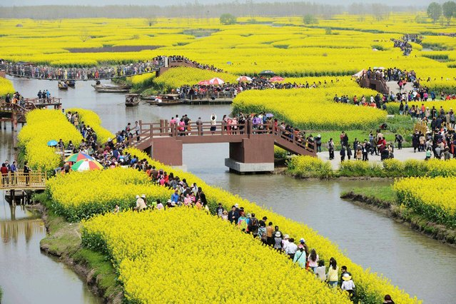 In this Sunday April 6, 2014 photo, tourists visit rapeseed field to see the blossoms in spring at Qianduo rapeseed field in Taizhou city, in eastern China's Jiangsu province. (Photo by AP Photo)