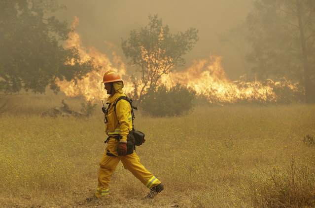 A firefighter walks past a fire near Lower Lake, Calif., Friday, July 31, 2015. (Photo by Jeff Chiu/AP Photo)