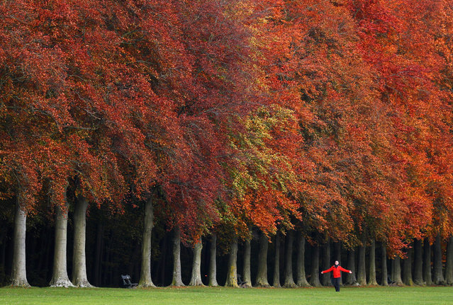 A man walks by trees with an autumn colour in a park in Tervuren, near Brussels, Belgium on November 12, 2019. (Photo by Francois Lenoir/Reuters)