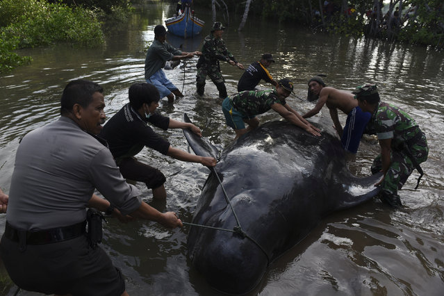 Indonesian soldiers, policeman and resident work to remove a dead whale stranded on the coast of Pesisir beach in Probolinggo, Indonesia, June 16, 2016. (Photo by abur Karuru/Reuters/Antara Foto)