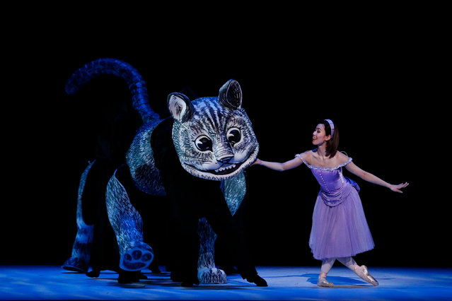 """Kat Chan: """"Puppet designer Toby Olié's Cheshire Cat is operated by eight dancers, so it was important to have it in the rehearsal room as soon as possible for everyone to practise with. It is also very lightweight and easy for the dancers to go through the large range of movements this puppet requires. It's made from semi-rigid foam, shaped and covered in painted canvas ... The trickiest part of this prop was surprisingly the painted teeth, which could have looked too """"vampiric"""" or """"fangy"""". It ended up being tweaked backstage by associate set designer Jaimie Todd, who made it a friendlier cat"""". (Photo by Jeff Busby/The Guardian)"""