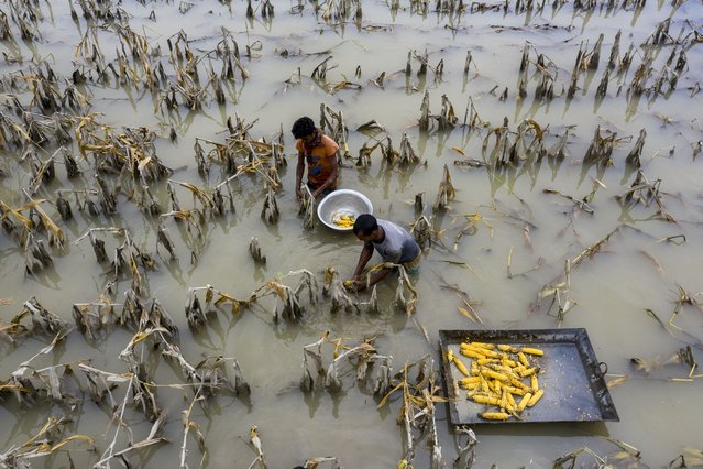 Crop fields are submerged in water after a deadly flood devastated the area on July 17, 2020. Thousands of hectares of rice, corn, jute and vegetable fields were swamped by the flood in Sariakandi, Bogura, Bangladesh. Photographer Azim Khan Ronnie said farmers lost their cattle and hundreds of homes were wrecked. (Photo by Azim Khan Ronnie/Solent News & Photo Agency)