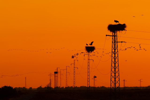 Garden and urban birds bronze winner. Electric by Carlos Cifuentes. (Photo by BPOTY/Cover Images)