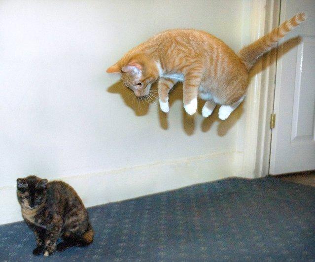 """""""Jumpology"""". """"Ninja kitty"""". (Photo by Nicki Summerson)"""