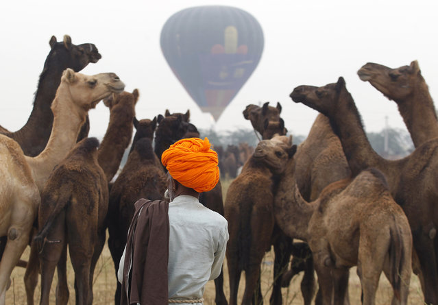 A camel herder wearing a turban arrives with his camels at the Pushkar Fair in the desert Indian state of Rajasthan November 1, 2014. (Photo by Jitendra Prakash/Reuters)