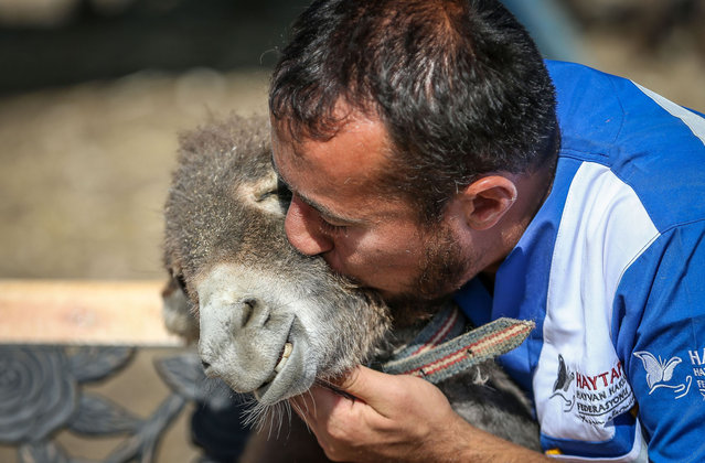 """A worker caresses a donkey at the Retired Animals Farm in Turkey's Bursa on October 01, 2020. Animal Rights Federation in Turkey (HAYTAP) established a """"Retired Animals Farm"""" in Bursa for animals that were tortured, thrown out by their owners, injured and in need of assistance for similar reasons. Built in the neighborhood of Baskoy in Nilufer district after long term efforts, the farm provides a home to animals of many species, such as horse, donkey, cow, sheep, chicken from all around Turkey. The farm project receives support from various institutions and organizations. (Photo by Sergen Sezgin/Anadolu Agency via Getty Images)"""