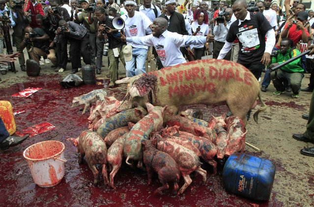 Protestors parade pigs and pig's blood as they participate in a demonstration against lawmakers' salary demands outside parliament buildings in the capital Nairobi, May 14, 2013. (Photo by Thomas Mukoya/Reuters)