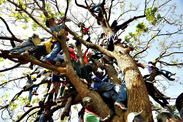 Supporters of Zimbabwe's Prime Minister climb up a tree during an election rally in Harare on July 29, 2013. Zimbabweans go to the polls on July 31 to choose between veteran President Robert Mugabe and long-time rival, Prime Minister Morgan Tsvangirai. Mugabe on July 28 made his final call for peaceful voting as he vowed that the upcoming crunch election will be free and fair. (Photo by Alexander Joe/AFP Photo)