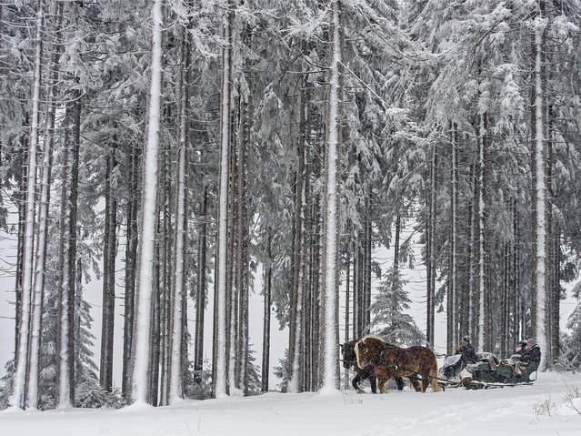 A horse-drawn carriage drives with tourists in the snow covered Thuringian Forest during heavy snowfall in Oberhof, Germany, Friday, Jan. 15, 2016. (Photo by Jens Meyer/AP Photo)