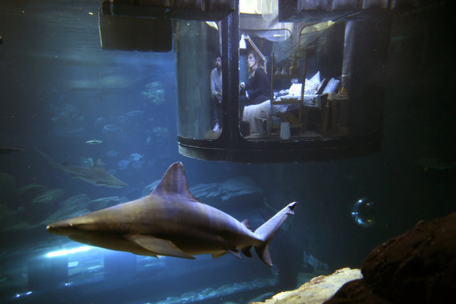 "People look at sharks from an underwater room structure installed in the Aquarium of Paris, France, March 14, 2016. Airbnb and the Aquarium of Paris offer contest winners a night underwater sleeping with sharks and create a research platform for ""misunderstood"" shark species. (Photo by Charles Platiau/Reuters)"