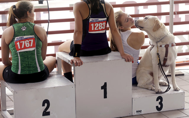 Emory Rains' Charlotte Brown, right, who is legally blind, sits with her guide dog, Vader, as she waits to receive her award after competing in the Conference 4A girls pole vault event at the UIL Texas State Track and Field Championships, Saturday, May 16, 2015, in Austin, Texas. Brown won a Bronze medal with her third place finish. (Photo by Eric Gay/AP Photo)