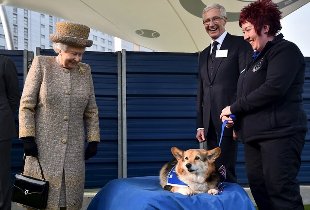 Britain's Queen Elizabeth looks at a corgi dog as television presenter Paul O'Grady (2nd R) smiles during a visit to Battersea Dogs & Cats Home in London in this March 17, 2015 file photo. (Photo by Ben Stansall/Reuters)
