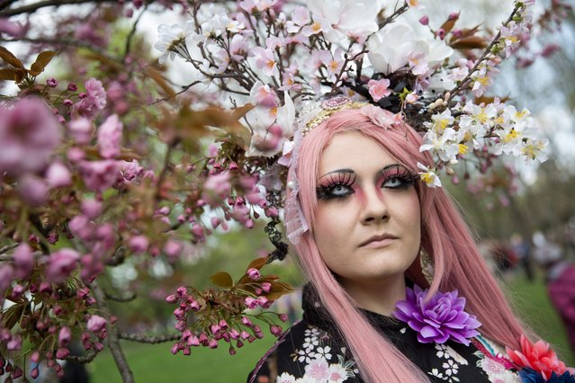 "Costumed German Velia poses during the cherry blossom festival in Berlin, Germany, 13 April 2014. The traditional festival is celebrated in the ""Gaerten der Welt"" (Gardens of the World). (Photo by Joerg Carstensen/EPA)"