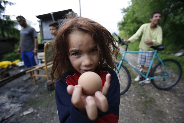 Roma girl Samira Ramic poses for photo as she shows a boiled egg, during St. George's Day celebration with her family members, in the village of Kiseljak, near Tuzla,140 kms north of Sarajevo, May 6, 2017. Members of the Roma minority community in Bosnia and Herzegovina celebrated their biggest holiday, St. George's Day, or Djurdjevdan, with traditional rituals such as taking baths and washing hands with water from church wells and cracking eggs, as the holiday marks the advent of spring. (Photo by Amel Emric/AP Photo)