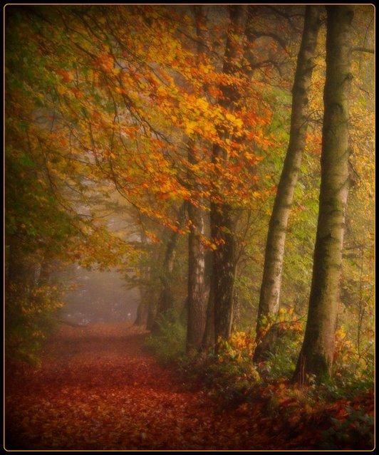 bei Hunstig – Walking in the mist