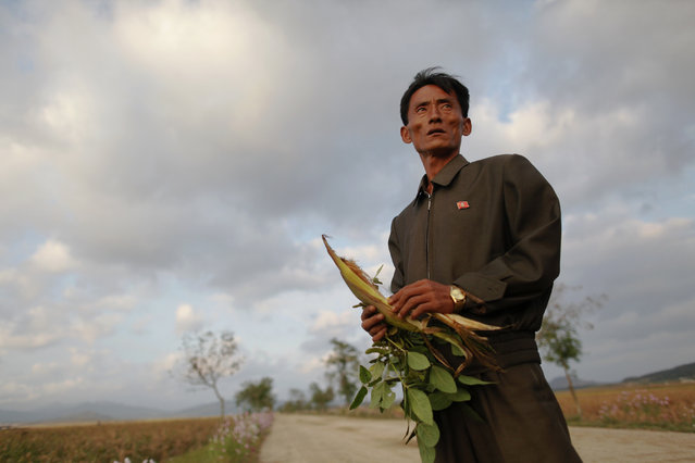 Pak Su Dong, manager of a cooperative farm hit by floods and typhoons shows damage to crops in South Hwanghae province, September 29, 2011. (Photo by Damir Sagolj/Reuters)