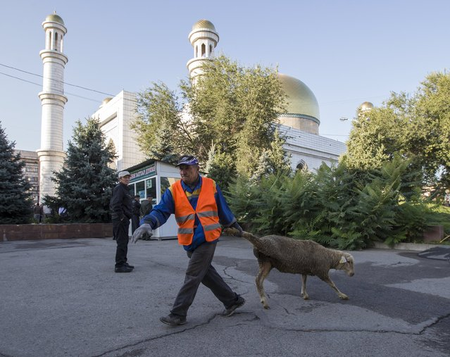 A man pulls a sheep for slaughtering after Kurban-Ait, also known as Eid al-Adha in Arabic, prayer in front of Central Mosque in Almaty, Kazakhstan, September 24, 2015. (Photo by Shamil Zhumatov/Reuters)