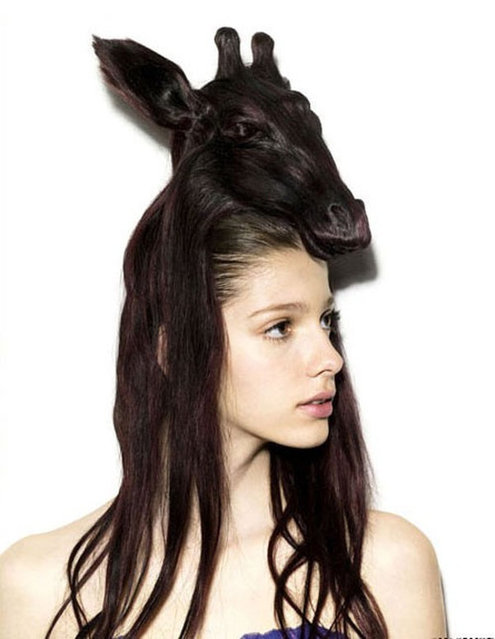 Creative Animal Hair Style Collections
