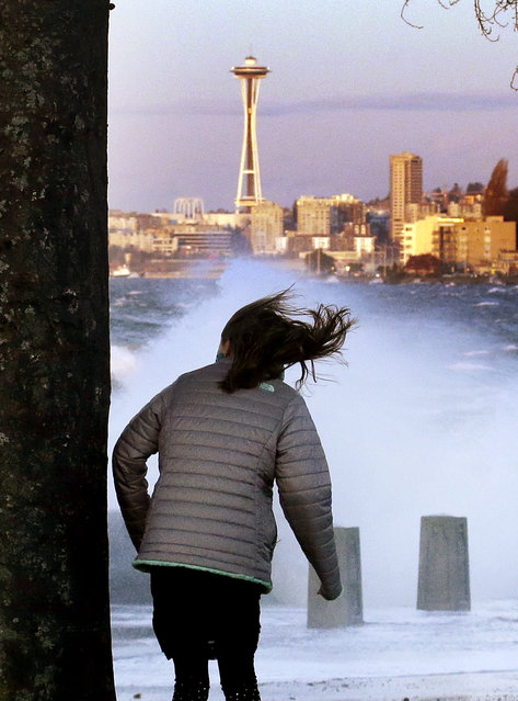 A woman stands near a tree to block against the wind as high-tide waves crash into Alki Beach Park, Tuesday, November 24, 2015, in Seattle. Sunny skies, with highs only into the mid-40's and lows just above freezing, are expected to continue through the weekend. (Photo by Elaine Thompson/AP Photo)