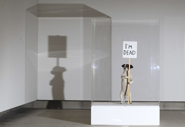 "An artwork of a taxidermied Jack Russell terrier entitled ""I'm Dead"" (2010) is displayed during a media viewing of artist David Shrigley's first major UK exhibition at the Hayward Gallery in London January 31, 2012. (Photo by Olivia Harris/Reuters)"
