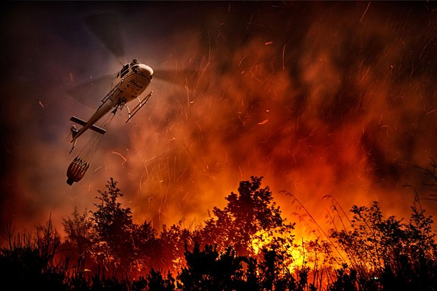 Inferno: Incredible shots show just how close this helicopter gets to the flames to put them out. (Photo by Antonio Grambone/Caters News Agency Ltd)