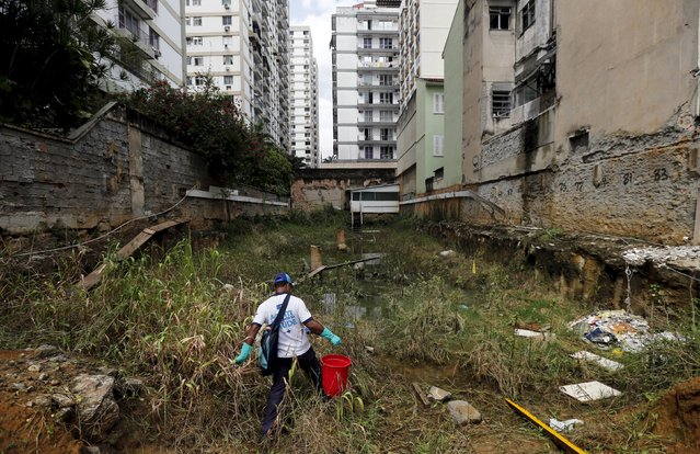 A health agent walks before using guppy fish to consume larva of Zika-transmitting mosquito in a wasteland near a construction site of new residential buildings at Tijuca neighborhood in Rio de Janeiro, Brazil, February 17, 2016. Municipal health authorities in Rio de Janeiro are using a biological control in the form the guppy fish to try to control the proliferation of the mosquito carrying the Zika virus. The Poecilia reticulate, the fish's scientific name, feeds on mosquito larva, stemming the growth of the vector in pools of stagnant water. (Photo by Sergio Moraes/Reuters)