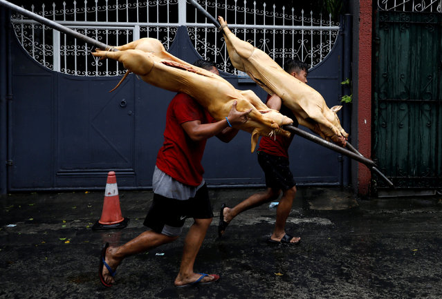 Workers carry slaughtered pigs to be roasted for New Year celebrations in Quezon City, Metro Manila, Philippines, December 31, 2018. (Photo by Eloisa Lopez/Reuters)