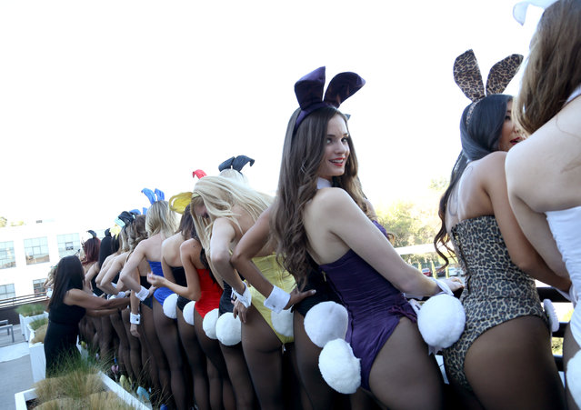 Playmate Bunnies pose for a portrait during Playboy's 60th Anniversary special event on January 16, 2014 in Los Angeles, California. (Photo by Rachel Murray/Getty Images for Playboy)