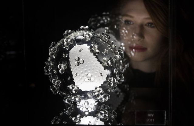 Tamsin Huggins, 22, looks at a jewel-like sculpture of the HIV virus which forms part of the Glass Microbiology exhibition that aims to brings the invisible world of viruses to life at At-Bristol science centre on February 3, 2017 in Bristol, England. Bristol based installation artist Luke Jerram's sculptures were designed in consultation with virologists from the University of Bristol, using a combination of different scientific photographs and models. They were made in collaboration with glassblowers Brian Jones and Norman Veitch. (Photo by Matt Cardy/Getty Images)